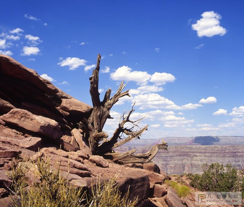 枯木艺术品景观